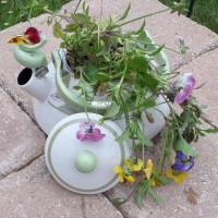 Tea Kettle Planter