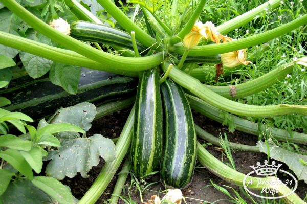 Small space garden ideas: Summer squash don't take up much space so they are good to plant. Mellons, and winter squashes are not good to plant due to the large amount of space they take up.