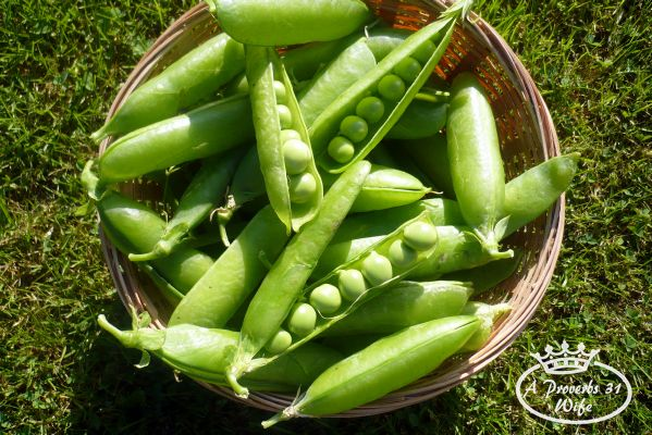 Small space garden ideas. If you plant peas, only plant enough to eat on. Planting enough to freeze or can takes up far too much space in a small garden.