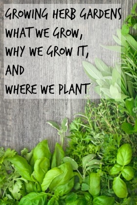 Growing Herb Gardens ~The Herbs I grow