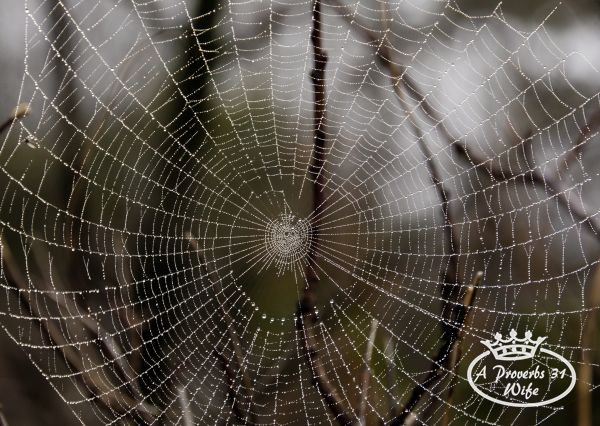 Dewy spider web - seeing God in the small things