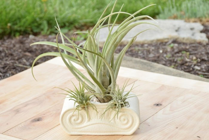Make your own creative air plant decorations