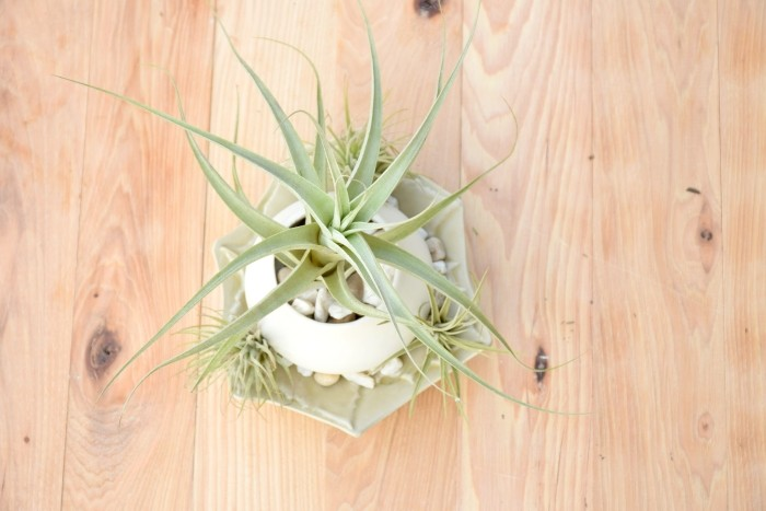 These creative air plant decorations would make perfect gifts!