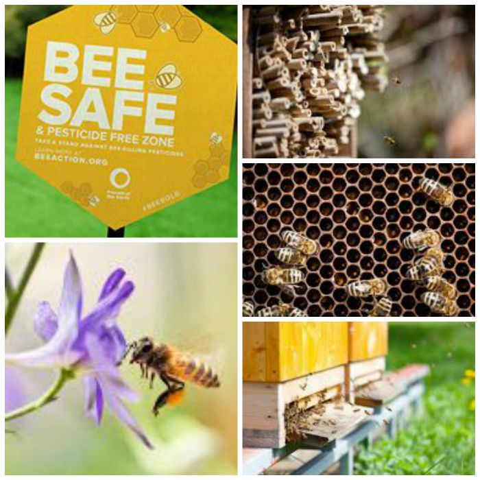 No bees no food. Click here for a list of ways bees help us and how we can help the bees.