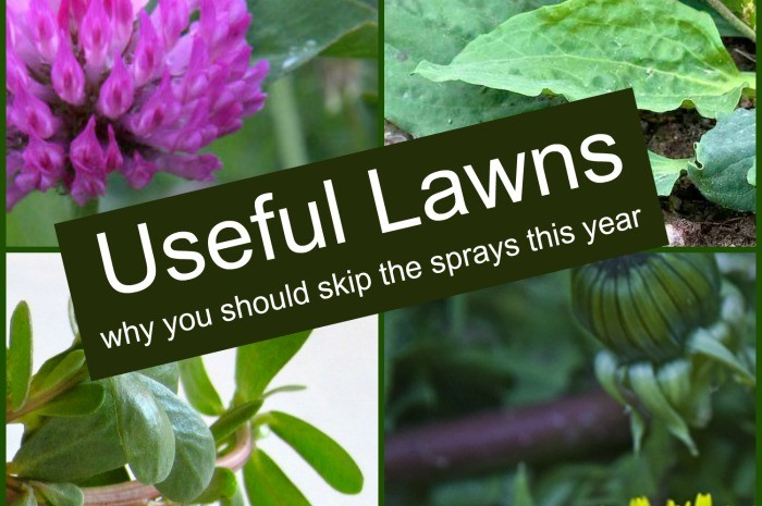 Useful Lawns – Don't Spray Your Yard!