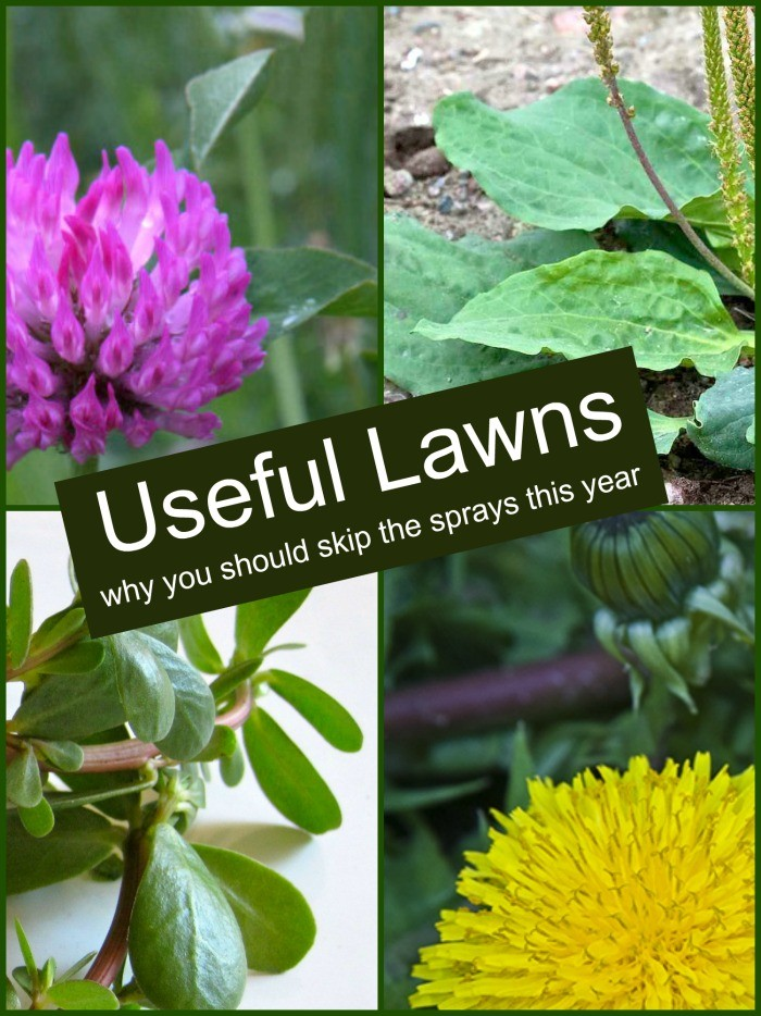 Don't spray your yard! Here's why you should grow useful lawns instead.
