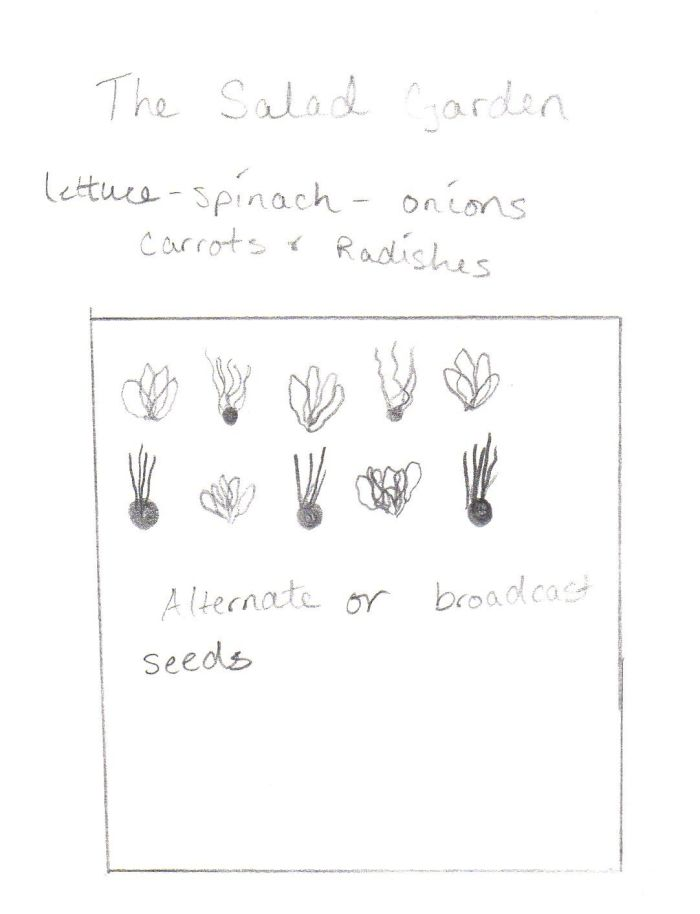Companion gardening and growing the 3 sisters. Salad garden diagram