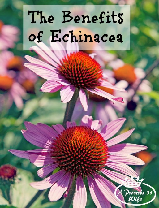 benefits of echinacea and how to use